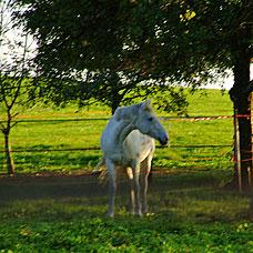 Greifensee grenzt an wunderschönes Naturschutzgebiet.