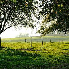 Die Gemeinde Greifensee liegt idyllisch im Grünen.