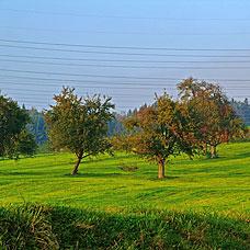Lindau ist von herrlicher Natur umgeben.