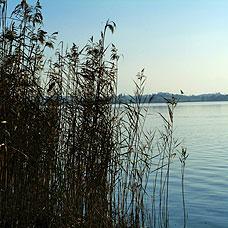 Die Stadt Pfäffikon liegt sehr idyllisch am Pfäffikersee.