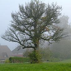 Die Gemeinde Wildberg ist ländlich geprägt.